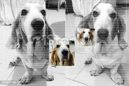 istock Face detection technology for dog basset hound with screen detection line and cute color image background. 946807166