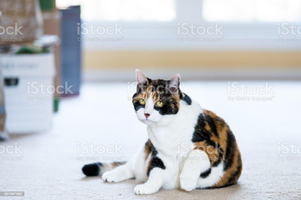 à l'intérieur de la chatte pics plus grosses queues autour