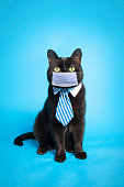 An adorable black cat wearing a tie and a protective face mask posing on a blue backdrop.