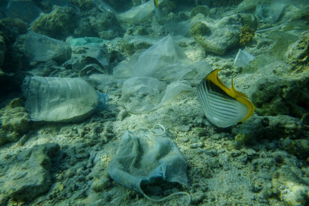 Face masks and plastic debris on bottom in Red Sea. Coronavirus COVID-19 is contributing to pollution, as discarded used masks clutter polluting seabed along with plastic trash stock photo