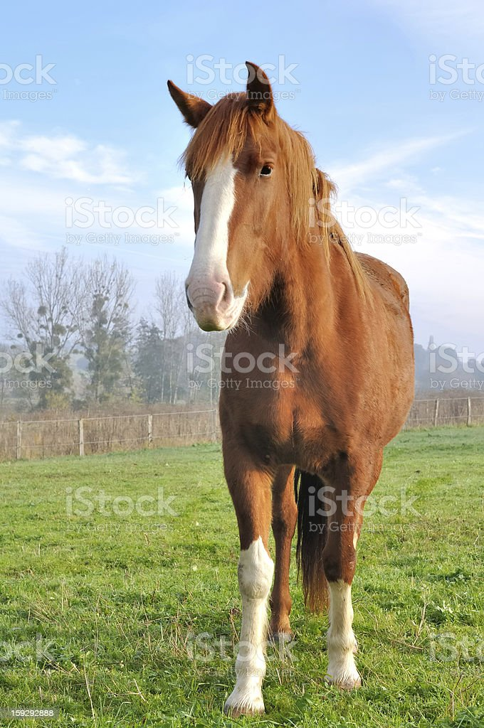 Face Of A Beautiful Horse Stock Photo Download Image Now Istock