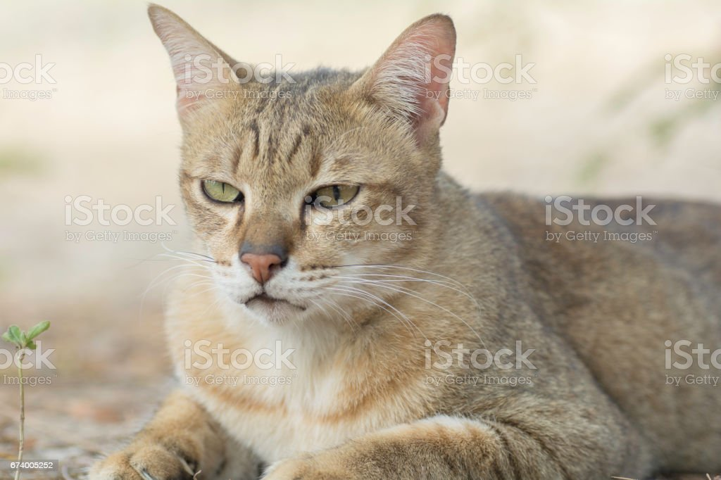 Face of cat in closeup royalty-free stock photo