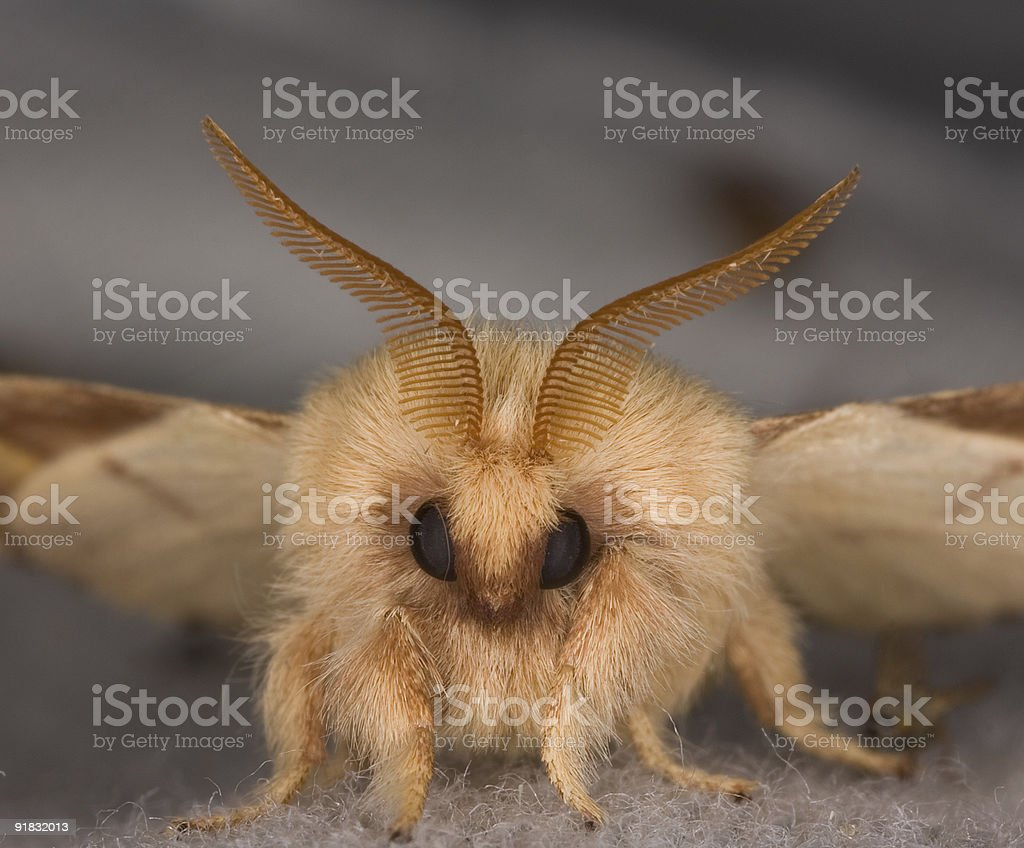Face of moth stock photo