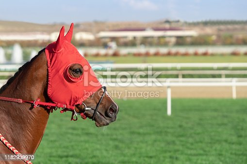 Face of Race Horse with Copy Space