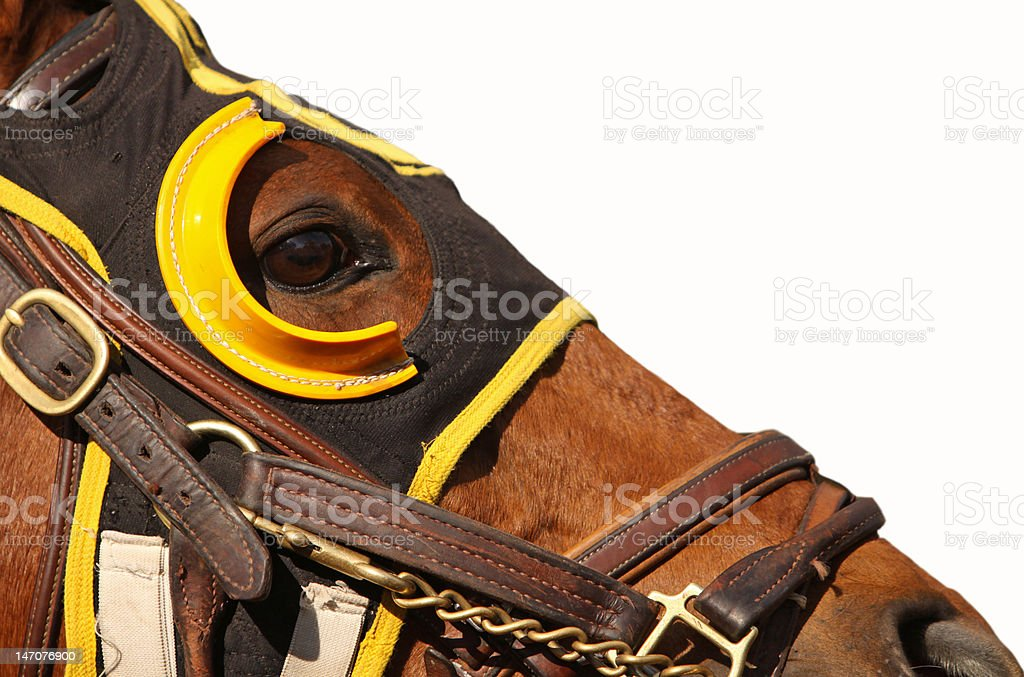 Face of Race Horse with Copy Space stock photo