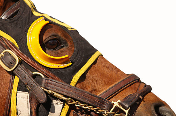 face of race horse with copy space - horse racing stok fotoğraflar ve resimler