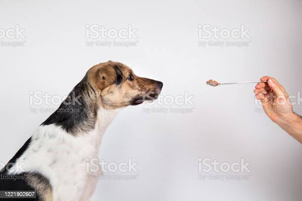 Faceless person feed the dog with a spoon on gray background picture id1221902607?b=1&k=6&m=1221902607&s=612x612&h=fj2cyyqjy7loisvfoy5l5tb66dx diocvj m1kp aiw=