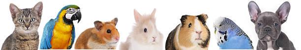 Caras de diferentes mascotas - foto de stock