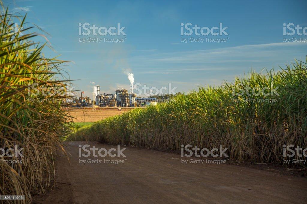 factory sugar cane stock photo