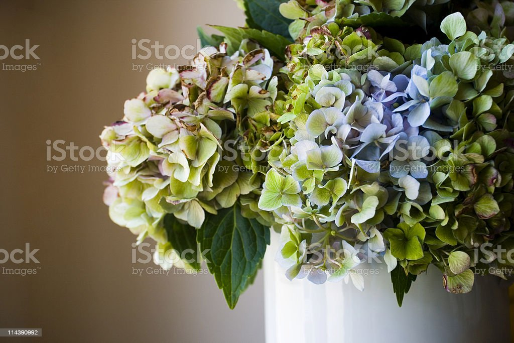 Faded Bouquet royalty-free stock photo