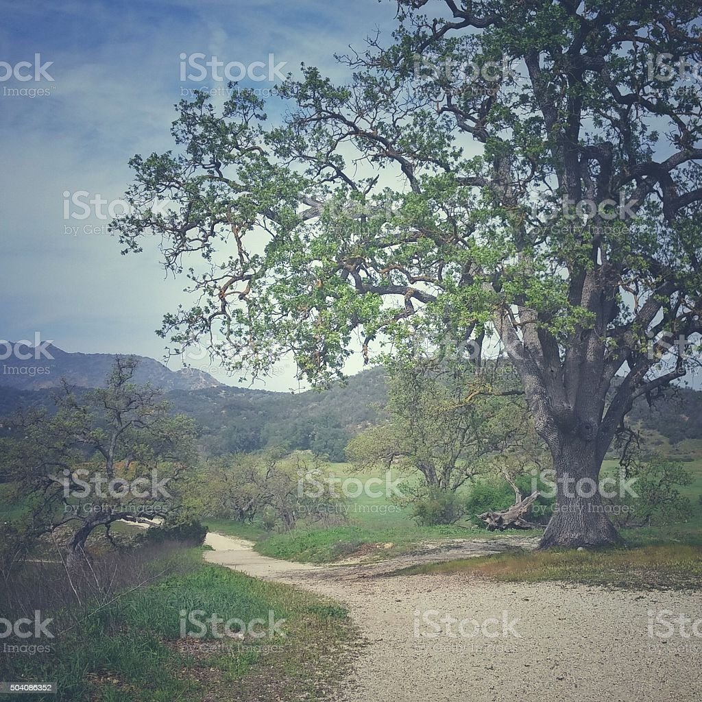 Faded Effect Live Oak Tree, Sandy Trail, Paramount Ranch, California stock photo