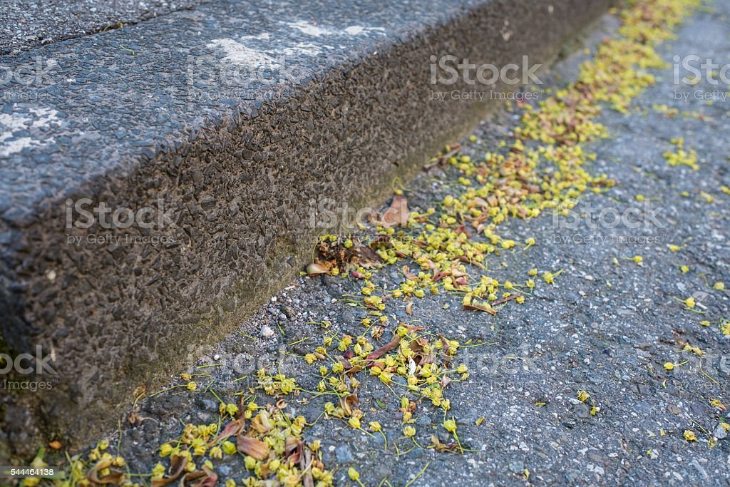 Faded flowers and pollen on a road stock photo