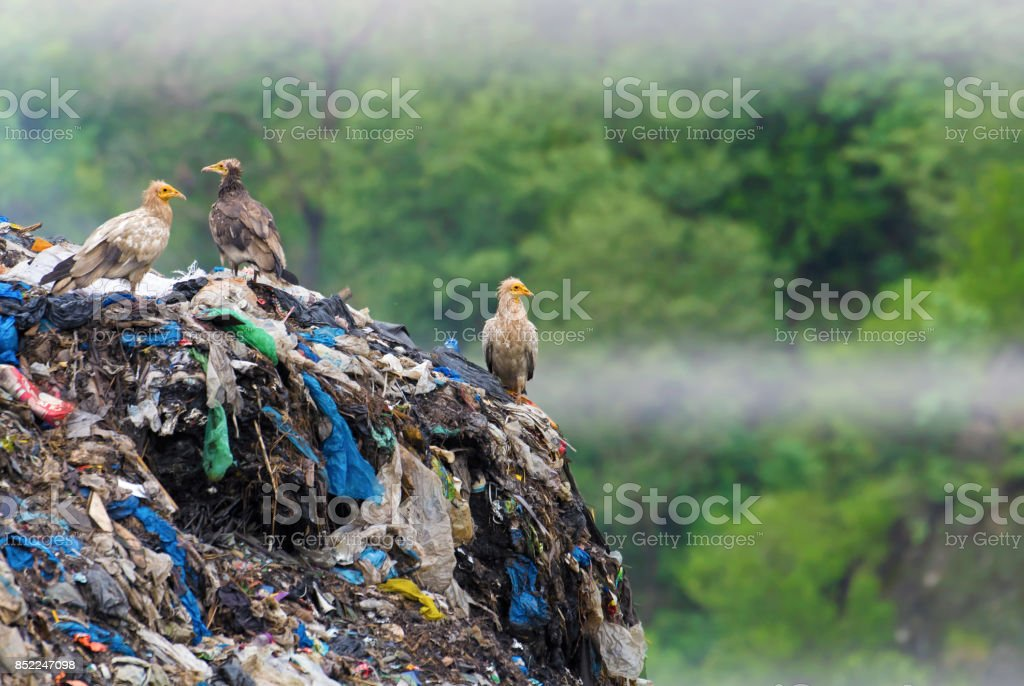 Failure of nature to decompose man made garbage ! ( stock photo