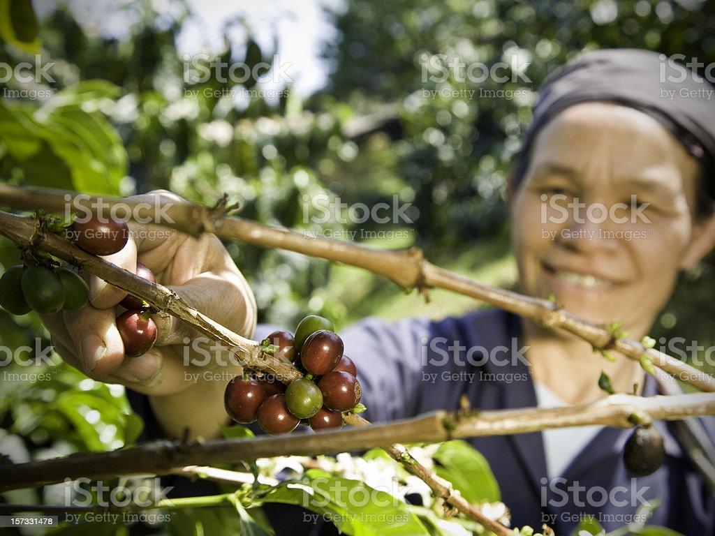 Fair Trade Coffee Farmer royalty-free stock photo