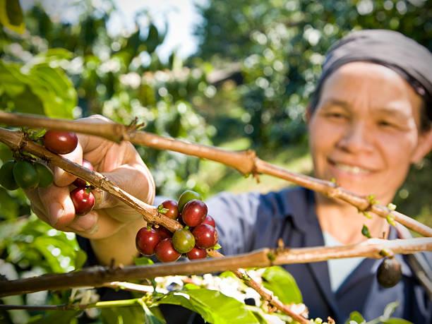 fair trade caffè agricoltore - coffee farmer foto e immagini stock