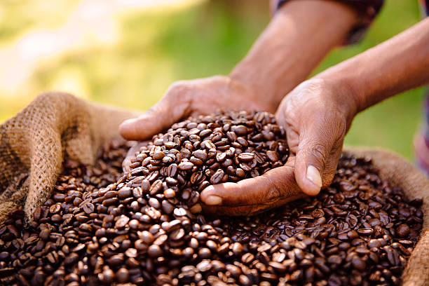 Fair trade farming is best for coffee bean produce stock photo