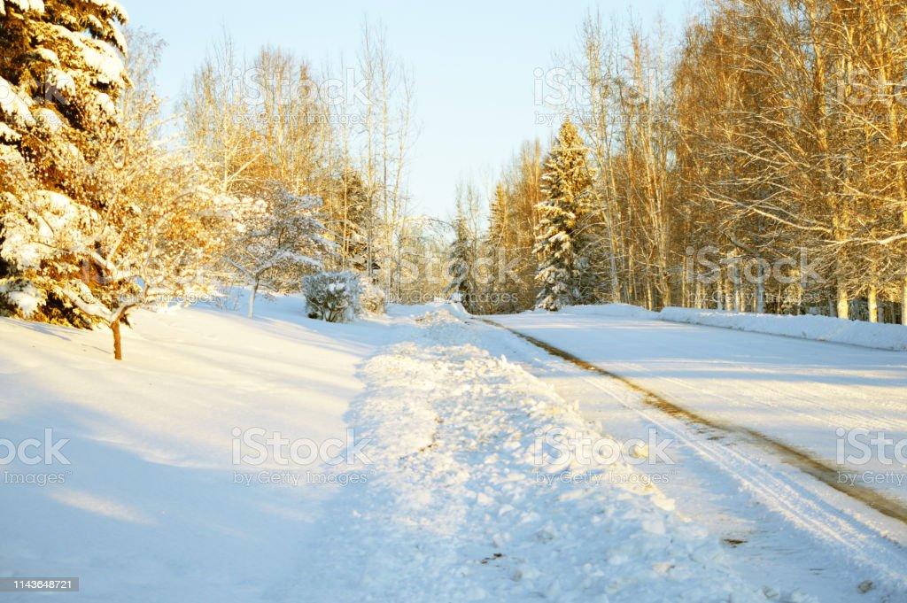 Paisagem do inverno de Fairbanks Alaska - foto de acervo