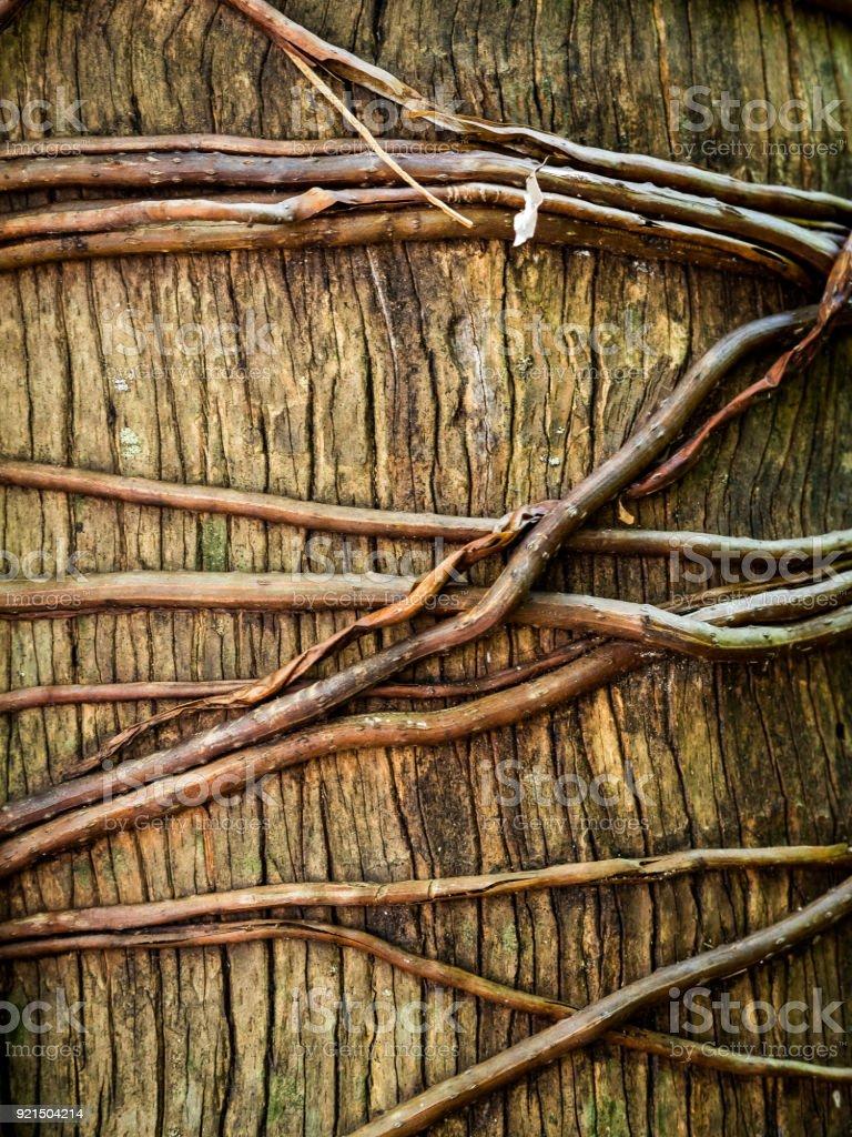 Fairchild Tropical Botanic Garden Stock Photo & More Pictures of ...
