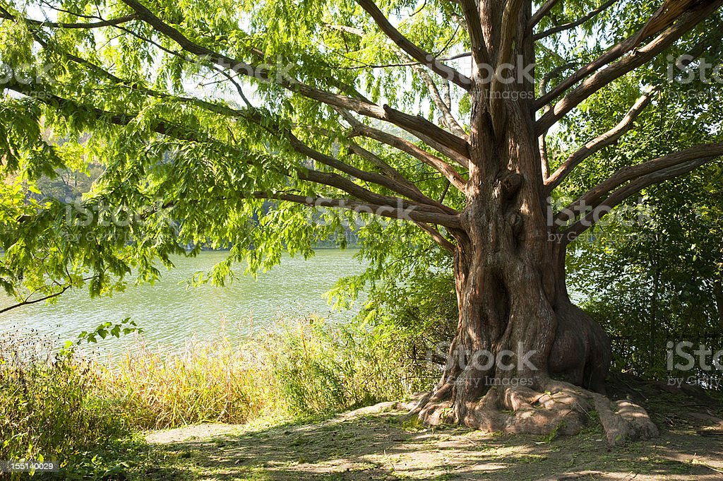 Fairly tale tree with the sun beaming through stock photo