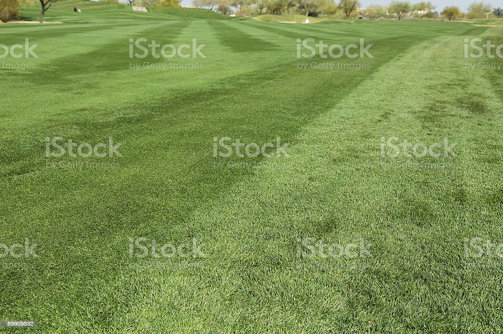 Fairway at a Professional Golf Course. royalty-free stock photo