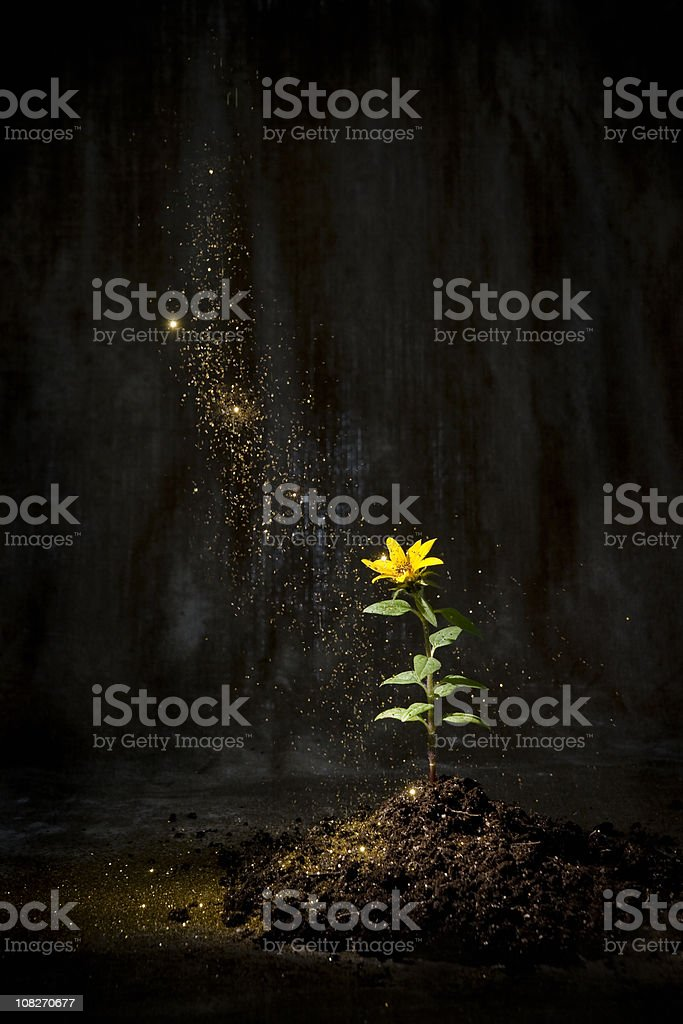 Fairy dust settling on a flower royalty-free stock photo