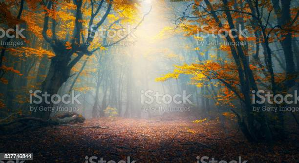 Photo of Fairy forest in fog. Fall woods. Enchanted autumn forest in fog in the morning. Old Tree. Landscape with trees, colorful orange and red foliage and blue fog. Nature background. Dark foggy forest