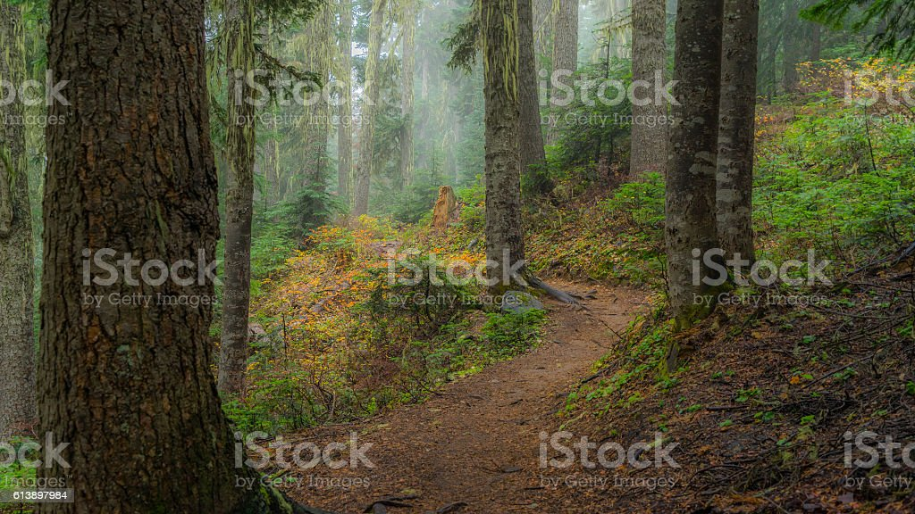 Fairy green forest. stock photo