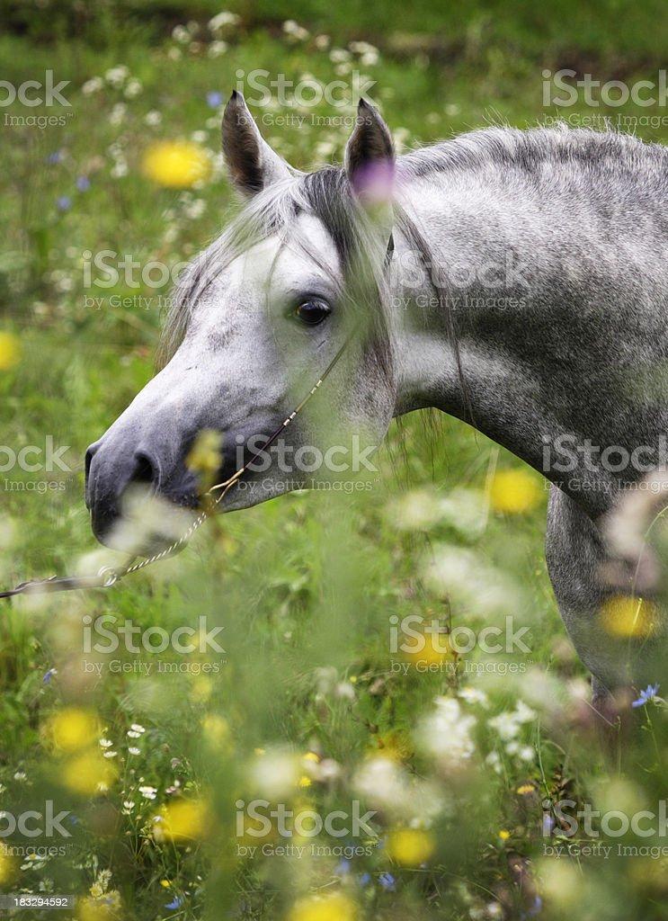 Fairy in wild-flowers stock photo