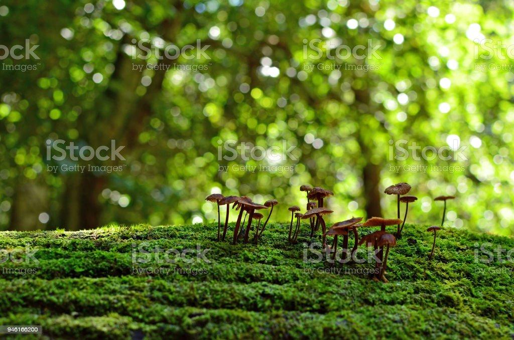 Setas de la tapa de tinta hadas en selva - foto de stock