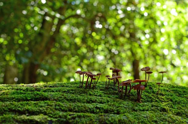 fairy ink cap svampar i regnskog - biologisk mångfald bildbanksfoton och bilder