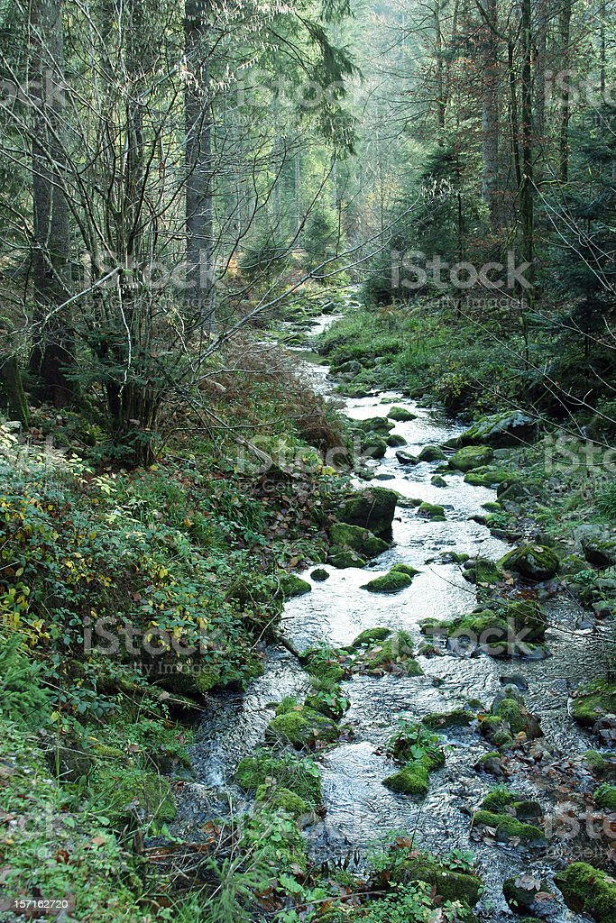 Fairy tale forest stock photo