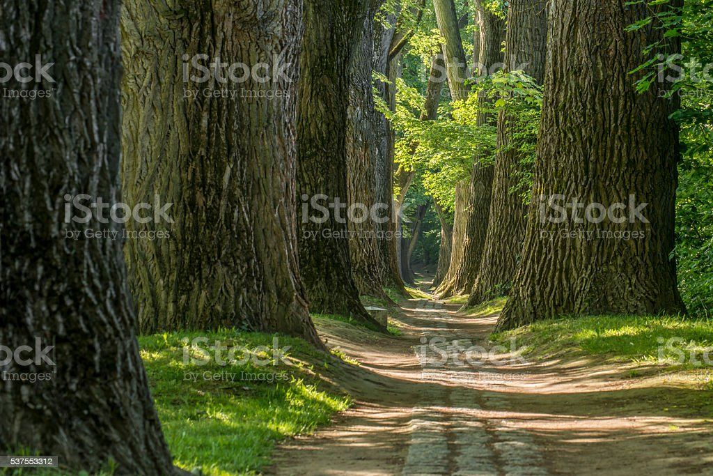 Fairy tale path in a forest with sun shining through stock photo
