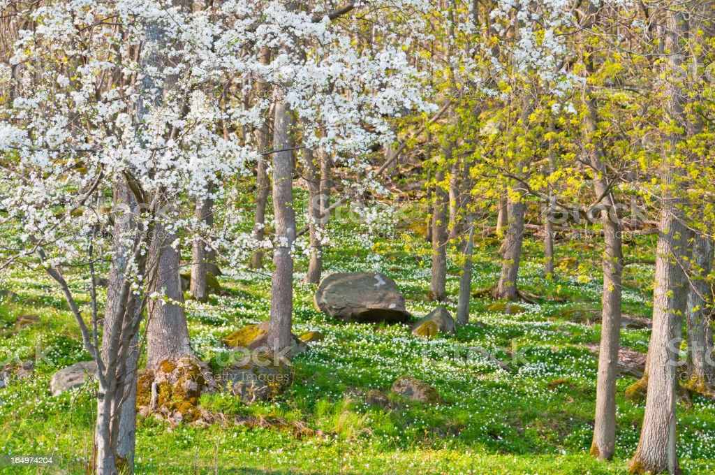 Fairy tale spring forest stock photo