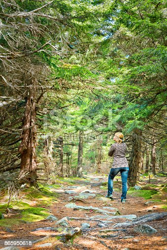 istock Fairy Tale spruce pine tree forest in West Virginia during autumn with one young woman standing on sunny day 865950618