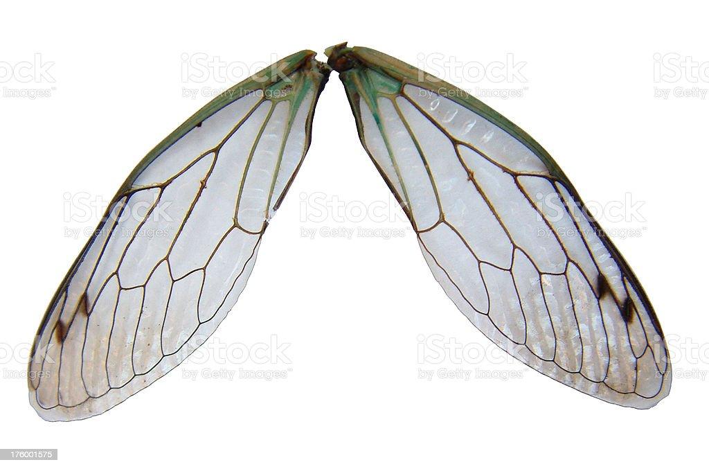 Fairy Wings royalty-free stock photo