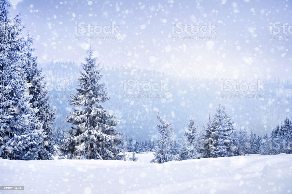 Fairy winter landscape with fir trees - Foto stock royalty-free di Albero