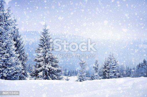 Fairy winter landscape with fir trees and snowfall. Christmas greetings concept