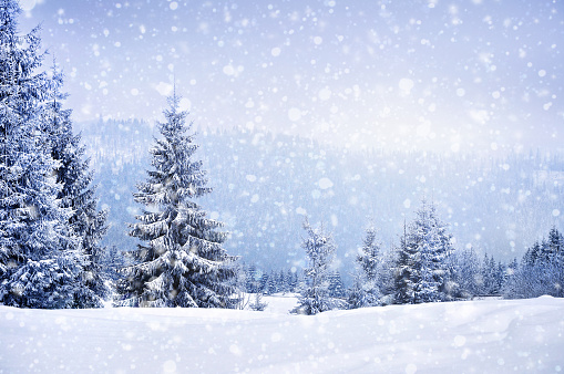 Fairy Winter Landscape With Fir Trees - Fotografie stock e altre immagini di Albero
