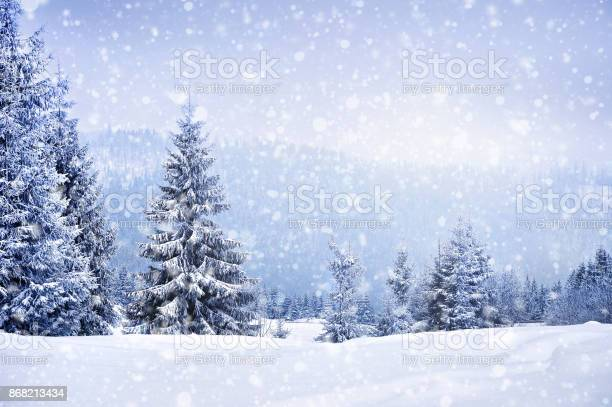 Photo of Fairy winter landscape with fir trees
