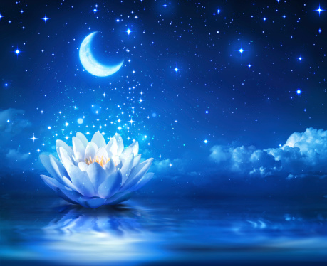 waterlily and moon in starry night