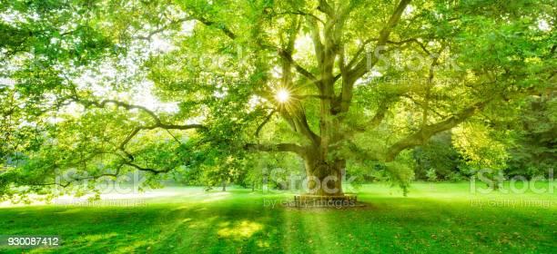 Fairytale forest of beech trees illuminated by sunbeams through fog picture id930087412?b=1&k=6&m=930087412&s=612x612&h=xigsn1yz4papztxqmans8fka1w4gfgtju m7spsoj2k=