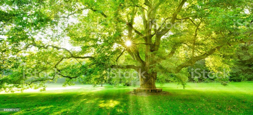 Märchen von Buche Waldbäume Farne bodenbedeckend durch Sonnenstrahlen durch Nebel, beleuchtet – Foto