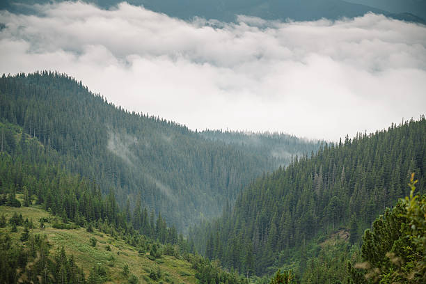 Fairytale Forest - Sunbeams in Carpaty stock photo
