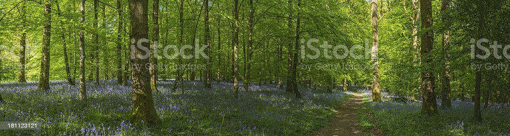 Fairytale forest trail through vibrant summer foliage bluebells idyllic woods stock photo