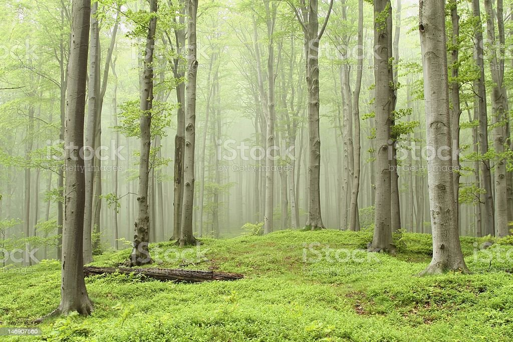 Fairytale Spring forest royalty-free stock photo