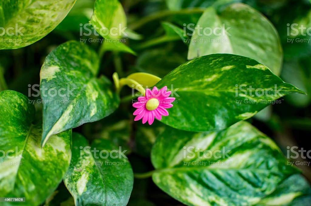Fake Flower With Real Green Leaves Stock Photo Download Image Now Istock