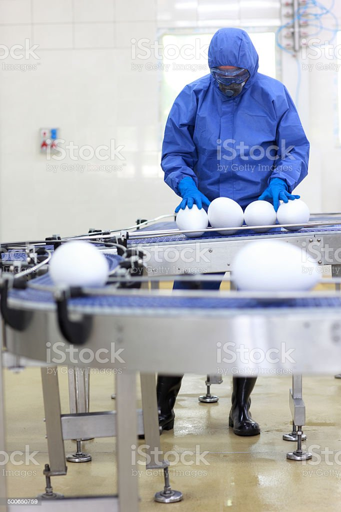 fake food - engineer examining xxl size egg stock photo