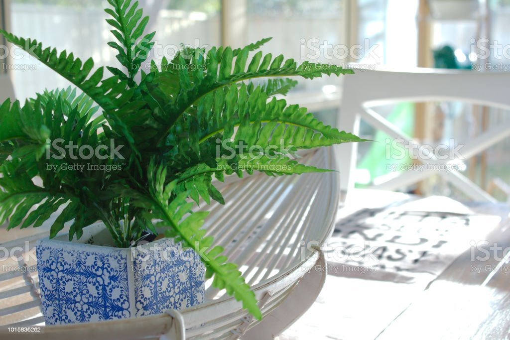 A Fake Green Fern House Plant Potted In A Blue White Plant ... Id Houseplants Ferns on fern container gardening, fern identification guide, fern id, fern scientific name, fern diagram, fern fiddleheads with brown scales, fern care, fern foxtail lily, fern assortment, fern variety, fern flowering shrubs, fern design, fern plants, fern propagation, fern bonsai, fern baskets, fern growing conditions, fern foliage, fern identification by leaf,