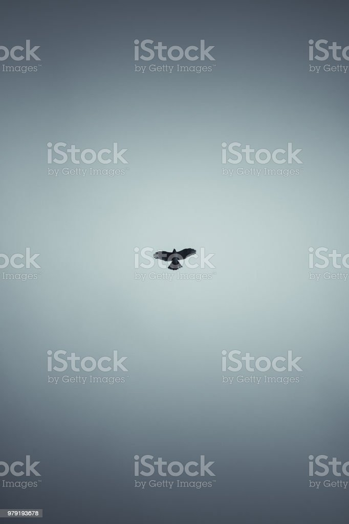 Falcon flying in dark blue sky, vertical stylized photo background