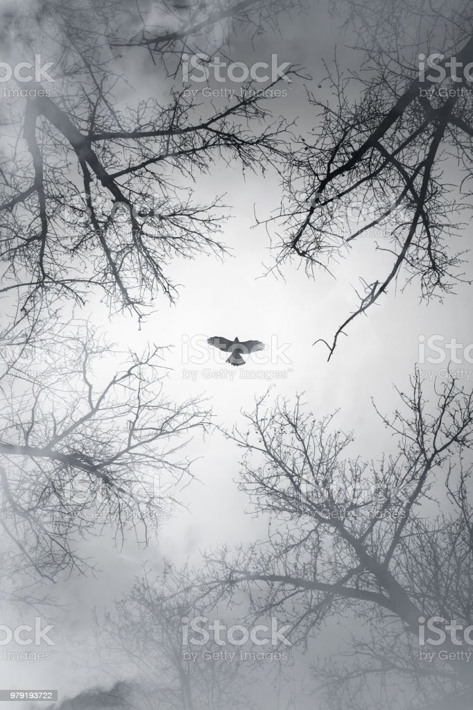 Falcon flying in sky over cloudy forest, vertical stylized photo...